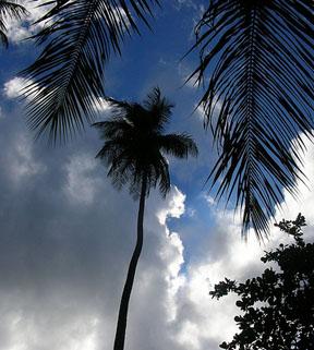 Tortola Weather